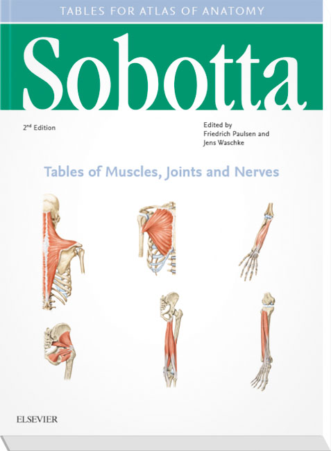 Sobotta Tables Of Muscles Joints And Nerves Englishlatin