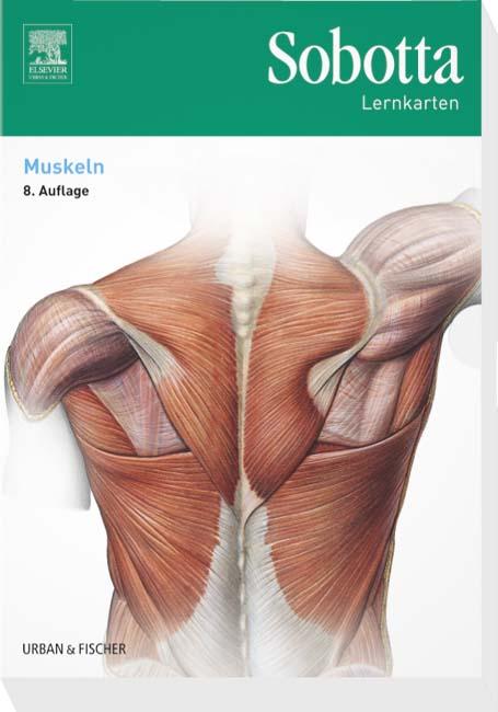 Sobotta Lernkarten Muskeln - 9783437429712 | Elsevier GmbH